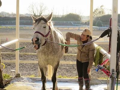 馬の上手な手入れ方法