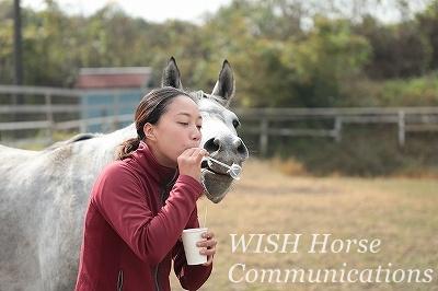 馬と仲良くなる