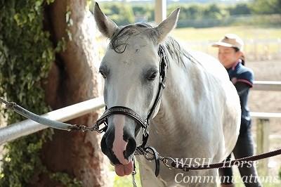 馬を幸せにする