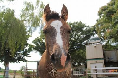 自然な馬の表情