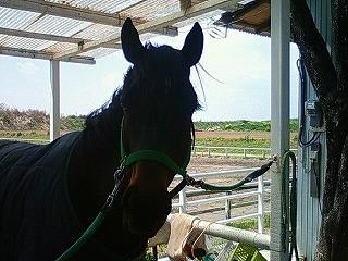 この馬は誰でしょう