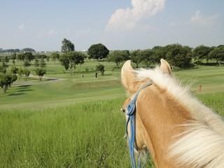 乗馬外乗のお供に馬のお散歩