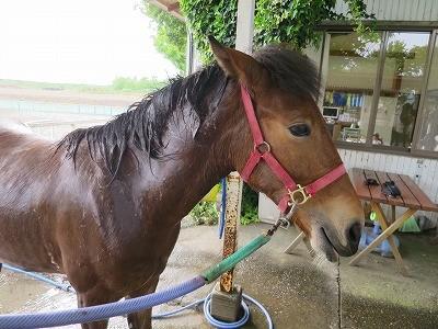 新馬調教 馬の気持ちの変化