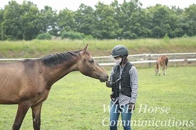 馬を大切にする乗馬