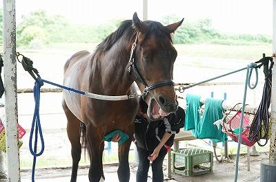 愛されている馬は表情が違う