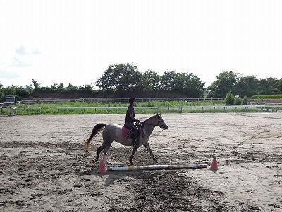 駈歩の練習方法グランドワーク後騎乗