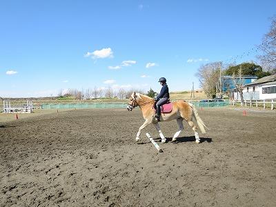 素敵な乗馬体験