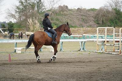 馬に語りかけるように乗る