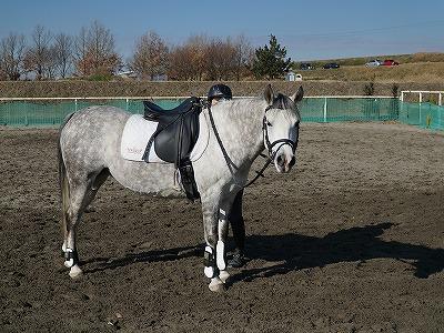 これが生き生きとした表情の馬ですよ