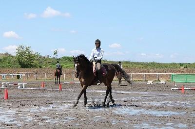 馬のハピネス