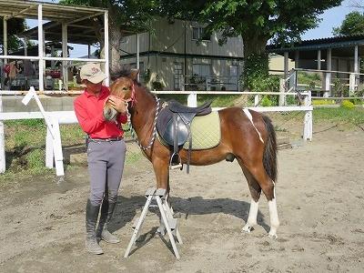新馬調教 馬を受け止める