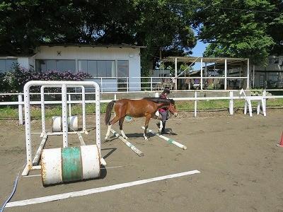 新馬調教 横木の教育