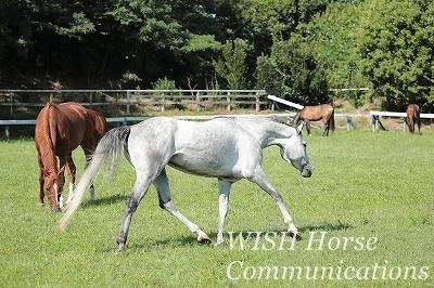 馬とのコミュニケーションの練習