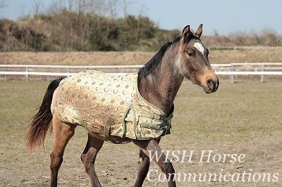 馬と会話する乗馬
