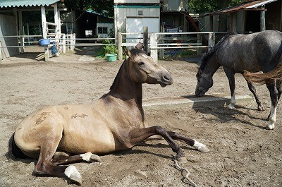 夏休み乗馬体験