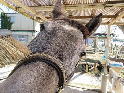 馬と心のふれあい
