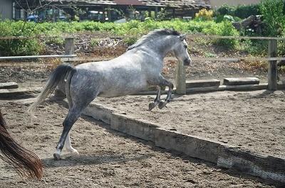 馬の飛越姿勢