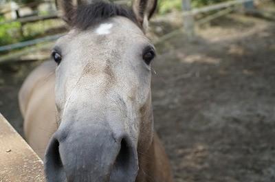 馬の気持ちがわかれば乗馬は安心