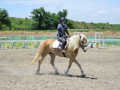 鞍によって乗り心地・乗り方が全然変わります!