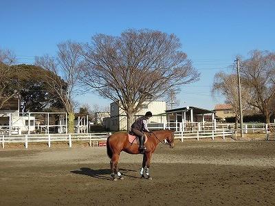 馬も幸せになる乗馬クラブでありますように