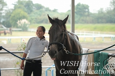 馬とのパートナーシップ