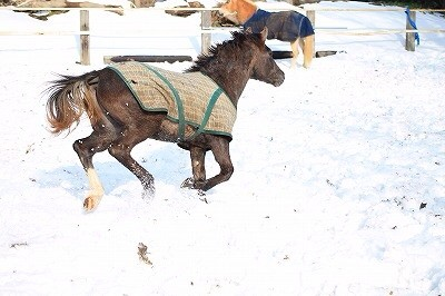 雪の中でのびのび馬達