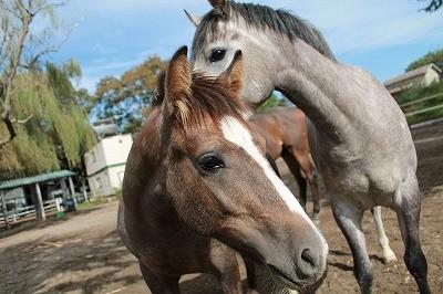 馬に上手に乗れるようになる一番の近道