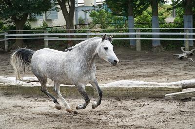 楽しそうな馬
