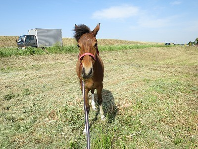 新馬調教 可愛い子には旅をさせよ
