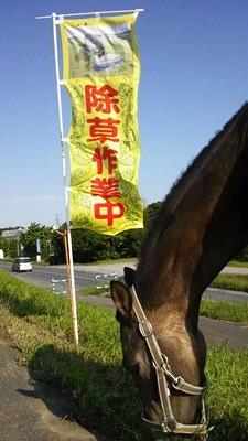 馬で除草作業中