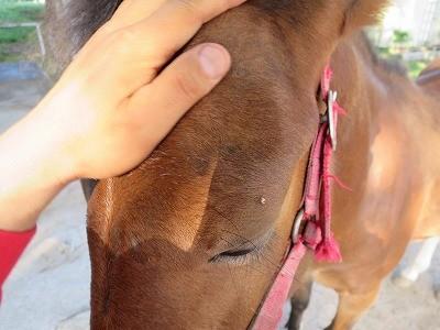 新馬調教 全身くまなく触れるように