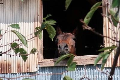 最高に可愛い馬たち