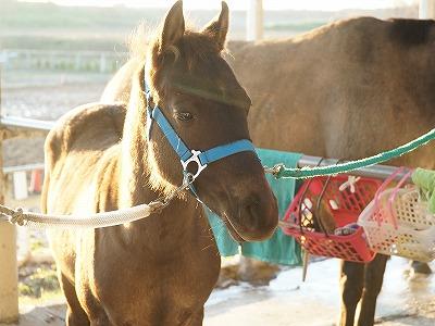 乗馬は愛情と思いやりだ