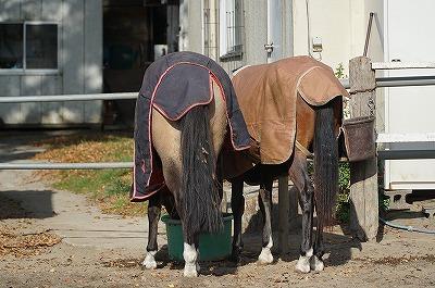 馬達の仲良し風景