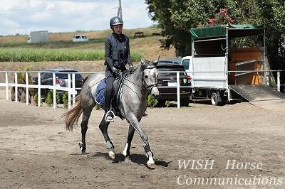 馬に丁寧な乗馬