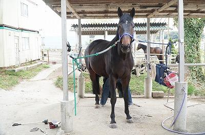 馬の蹄の管理は自分がするもの