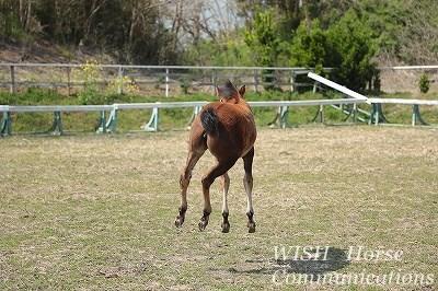 子馬のジャンプ