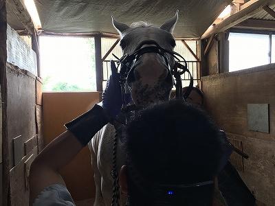 馬の歯の管理