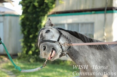 馬の甘えた表情