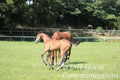 馬のしつけと教育