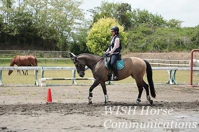 乗馬とメンタル