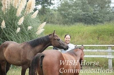 馬に囲まれて
