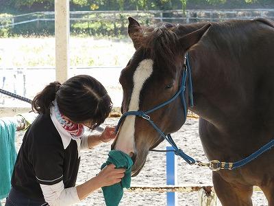 人と馬の心