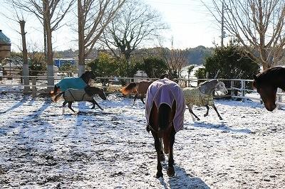 雪景色にはしゃぐ馬達