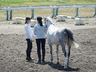 馬との触れ合い方から学びましょう