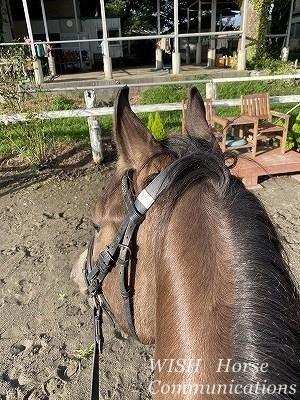 乗馬の成長