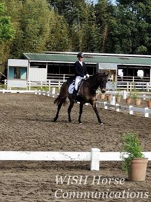 馬に学ぶ乗馬