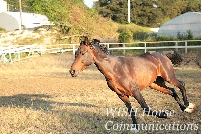 金色に輝く馬