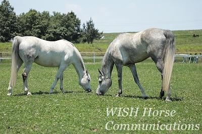 馬と一緒にいる乗馬
