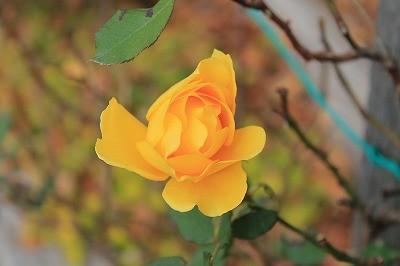 きれいに咲いてくれてありがとう